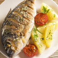 דגים: המדריך השלם